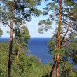 Summer landscape with trees ashore. — Stockfoto #12768871