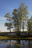 Krajobraz lato z drzew na lądzie. — Zdjęcie stockowe