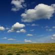 Foto Stock: Summer landscape of blossoming field and sky with clouds.