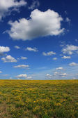 летний пейзаж цветущие поля и небо с облаками. — Стоковое фото