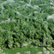Background of green foam. — Stock Photo
