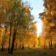 Landscape of the autumn wood. — Stock Photo