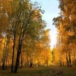 Landscape of the autumn wood. — Stock Photo #13165113