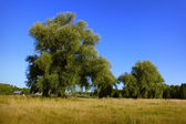 Paisagem de verão de um campo na vila. — Foto Stock
