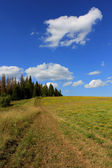 Sommar landskap av ett blommande fält och himlen med moln. — Stockfoto