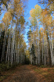 Autumn landscape of the road going on the wood. — Stock Photo