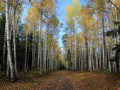 Jesień krajobraz drogi będzie na drewno. — Zdjęcie stockowe