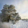 Landscape winter road.        — Stockfoto