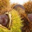 Castagne - Stock Photo