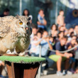Eagle owl — Stock Photo #13913445