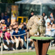 Eagle owl — Stock Photo #13913508