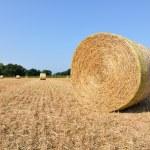Bales of hay — Stock Photo #28928293