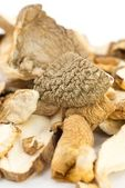 Porcini mushrooms dried — Stock Photo