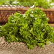 Stock Photo: Fresh Organic Green Parsley