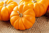 Fresh Orange Organic Pumpkin — Foto Stock
