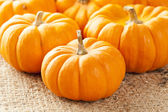 Fresh Orange Organic Pumpkin — Stock Photo