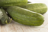 Organic Green Pickle Cucumbers — Stock Photo
