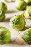 Organic Green Brussel Sprouts — Stock Photo