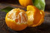 Resfreshing Organic Mandarin Orange — Stock Photo