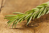 Fresh Organic Green Rosemary — Stock Photo