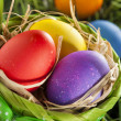 Colorful Dyed Eggs for Easter — Stok Fotoğraf #42014015