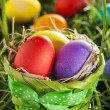 Colorful Dyed Eggs for Easter — Stok Fotoğraf #42014041