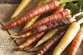 Colorful Multi Colored Raw Carrots — Stock Photo