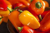 Group of Organic Colorful Hot Peppers — Stock Photo