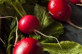 Organik çiğ kırmızı turp — Stok fotoğraf