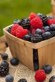 Healthy Organic Ripe Berries — Stock Photo