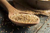 Raw Organic Mustard Seeds — Stock Photo