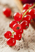 Organic Raw Red Currants — Stock Photo