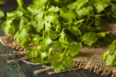 Organic Raw Green Cilantro — Stock Photo