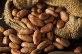 Raw Organic Cocoa Beans — Stock Photo