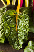 Raw Organic Rainbow Swiss Chard — Stock Photo