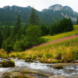 Creek, mountains and trees - Stock Photo