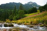 Creek, mountains and trees — Foto de Stock