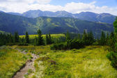 Beautiful mountain meadow and pine trees — Stock Photo