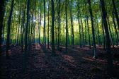 Beautiful sunny forest — Stock Photo