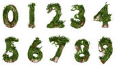 All numbers constructed from vines and leaves — Stock Photo