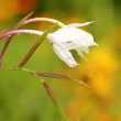 Foto Stock: White Garden Flowers