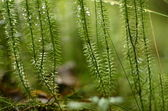 Green beautiful plant — Stock Photo