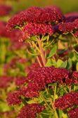 Kleurrijke wilde bloemen in de herfst — Stockfoto