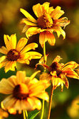 Barevné kytice na podzim — Stock fotografie