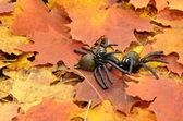 Brown halloween spiders — Stock Photo