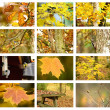 Stock Photo: Autumn set