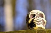 Old Skull — Stock fotografie