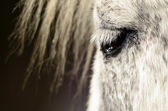 White horse eye — Foto de Stock