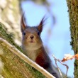 Squirrel in the woods — Stock Photo #24108363