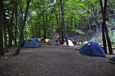 Forest Camping — Stock Photo